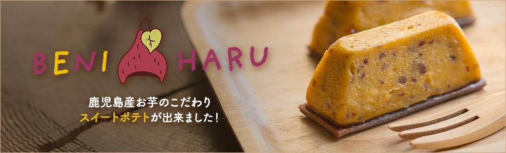 BENIHARU 鹿児島産お芋のこだわりスイートポテトが出来ました!(3/19~発売開始限定500食)